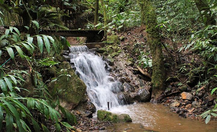 RPPNM Bosque da Coruja