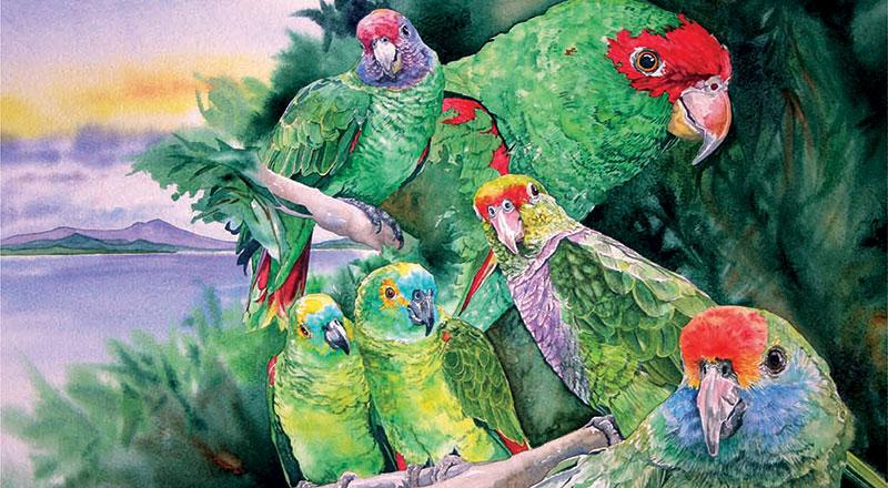 Capa do Plano de Ação Nacional para Conservação dos Papagaios